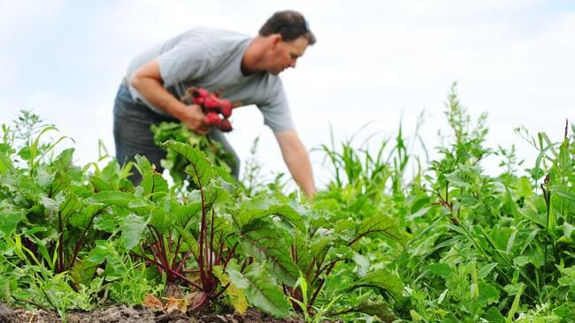 10 Most Profitable Specialty Crops to Grow - Profitable ...
