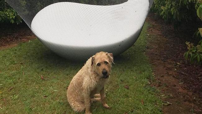Damp dog no match for giant hail. Picture: Jessica Brooks