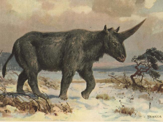 Elasmotherium was an extinct genus of giant rhinoceros native to Asia during the Pliocene through Pleistocene eras. Picture: Florilegius