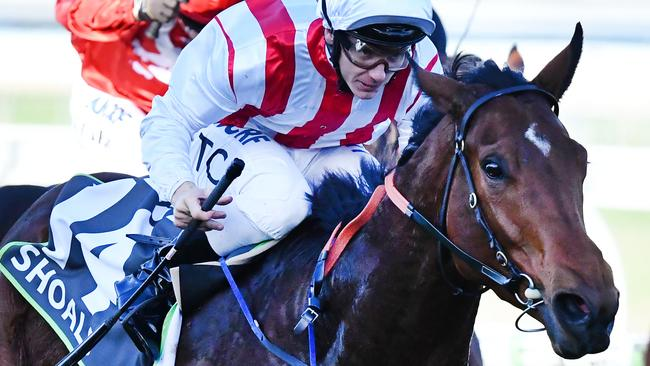 Shoals won three Group 1 races last season and is among the favourites for The Everest. Picture: AAP