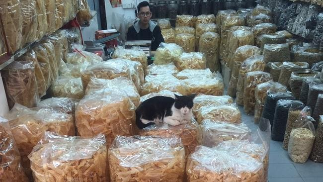 This cat guarding a pile of shark fins.