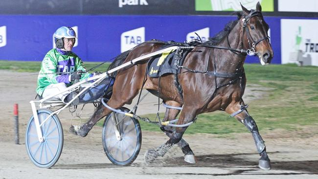 Hectorjayjay is equal favourite with Lennytheshark for the Inter Dominion. Picture: Stuart McCormick