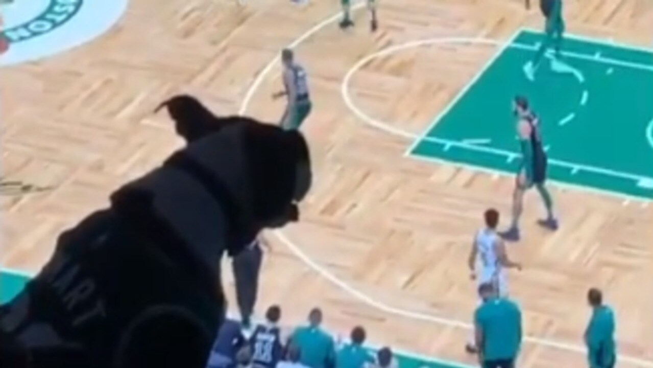 Ball is Life: Dog Attends Celtics Game in Boston