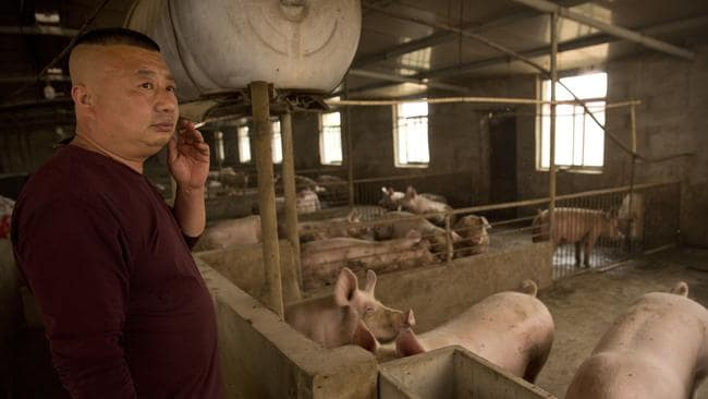 Pork stocks in Asia have been decimated by the African swine virus. Picture: AP/Mark Schiefelbein