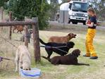 Tea Tree Gully CFS volunteer Olivia Kricskovics, 20, gives dogs rescued from the Tea Tree Gully boarding Kennel and Cattery a drink at the Paracombe CFS station. Picture: Dylan Coker