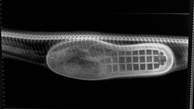 The X-ray shows the slipper is still in one piece.