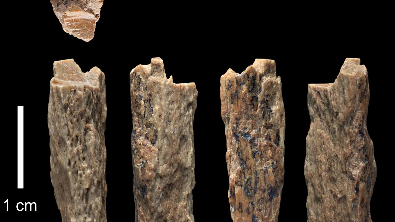 A bone fragment from a 13-year-old girl with a Neanderthal mother and Denisovan father found in the cave. Picture: University of Oxford/Max Planck Institute/AFP/Ian R. Cartwright