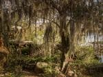 Weeping willows make the park look even sadder. Eerie pics of the abandoned Disney River Country theme park in Florida, USA. Picture: Seph Lawless