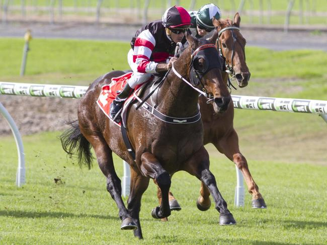 Thorondor wins on debut at Morphettville. Picture: Atkins Photography