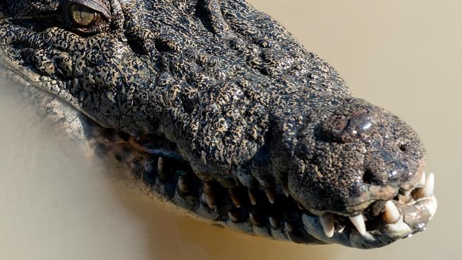 'Terror croc' ate dinosaurs with banana-size teeth – Northern Star