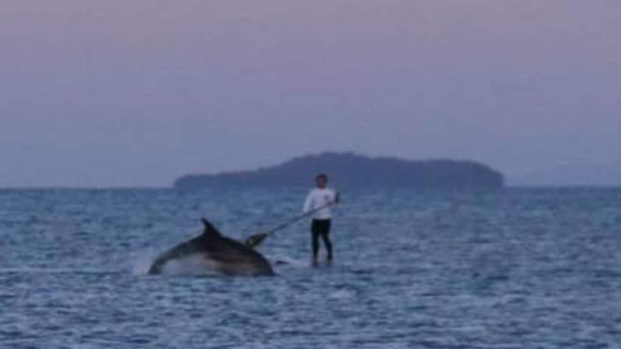 Dolphins Breach Just Inches From Paddleboarders