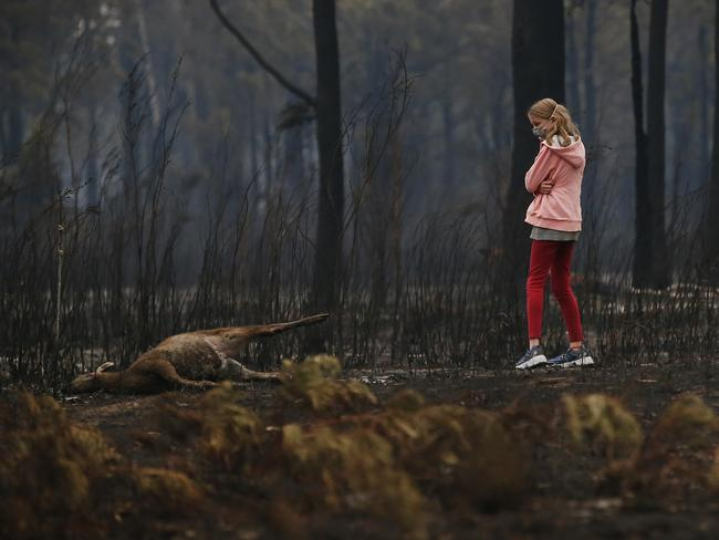 A young girl looks at the burnt body of dead kangaroo while walking her dog along a scorched property at Mallacoota. Picture: David Caird