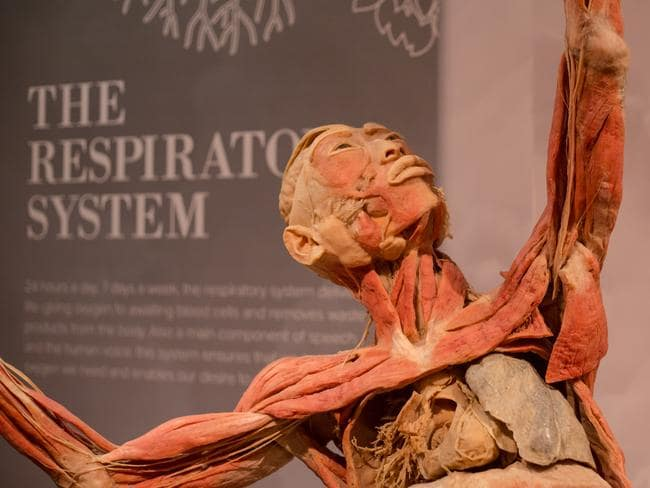 Real Bodies The Exhibition Coming To Moore Park Next Month