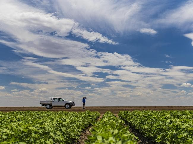 Cotton capital of Australia, but loads of other farming opportunities too. Picture: Josh Smith