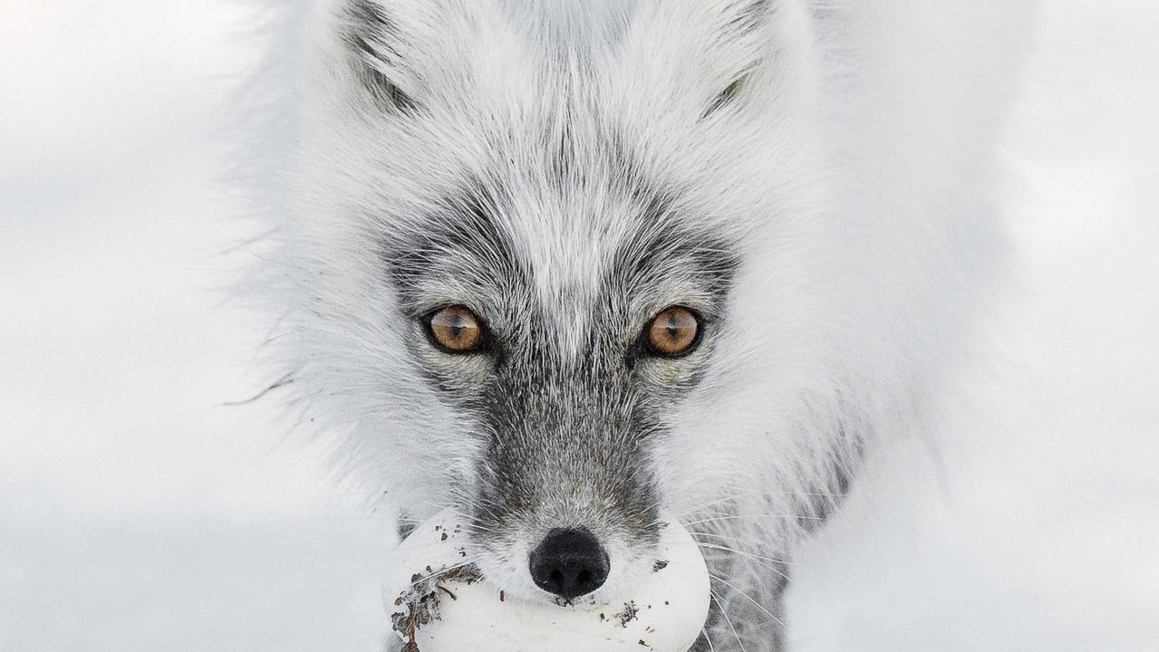 Arctic treasure by Sergey Gorshkov.