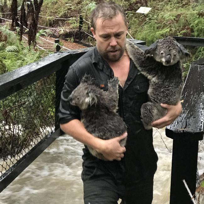The Australian Reptile Park had to close its doors to visitors today when a flash flood tore through the area. Picture: Australian Reptile Park/AAP