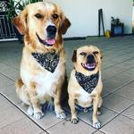 Willow and Lenny ready to go for a walk. These two love their walks and are well known dogs around Glenelg. Picture: Tori Brown
