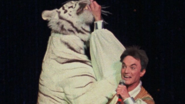 Roy pictured with the tiger during one of their shows.