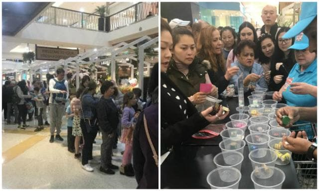 Chaotic scenes at Coles Little Shop swap events across the country