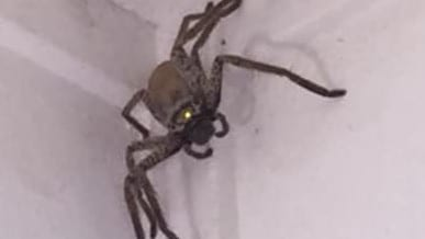 A Townsville resident posted photos of this giant spider she spotted in her house. Picture: Facebook