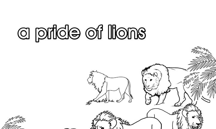 pride_of_lions