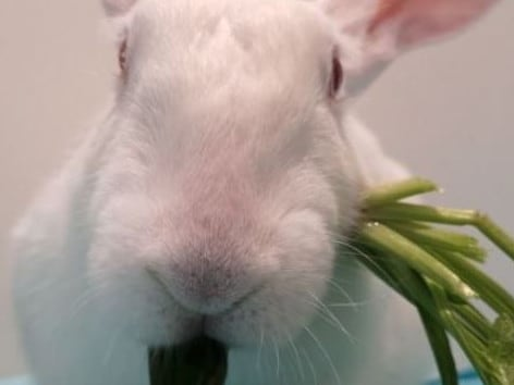 Mia also set up a GoFundMe to pay for the vet bills of the 16 rabbits. Picture: GoFundMe