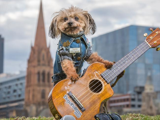 Dog lovers unite! A dog friendly music festival will be held to raise money for Oscar's Law and other animal charities. Picture: Jason Edwards