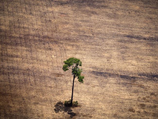 Shocking...Deforestation is illegal but rampant in the Brazilian Amazon, and there are few safeguards in place to stop it, Greenpeace says. Picture: AFP/Raphael Alves