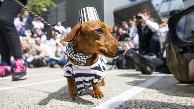 Dachshunds Descend On Southgate To Win Title Of Top Dog