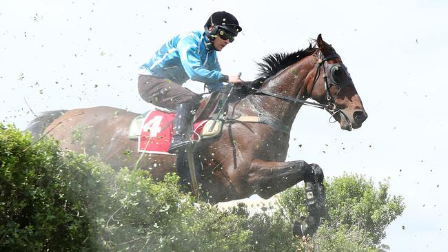 Spying On You will chase back-to-back wins in the Great Eastern Steeplechase at Oakbank. Picture: Tait Schmaal