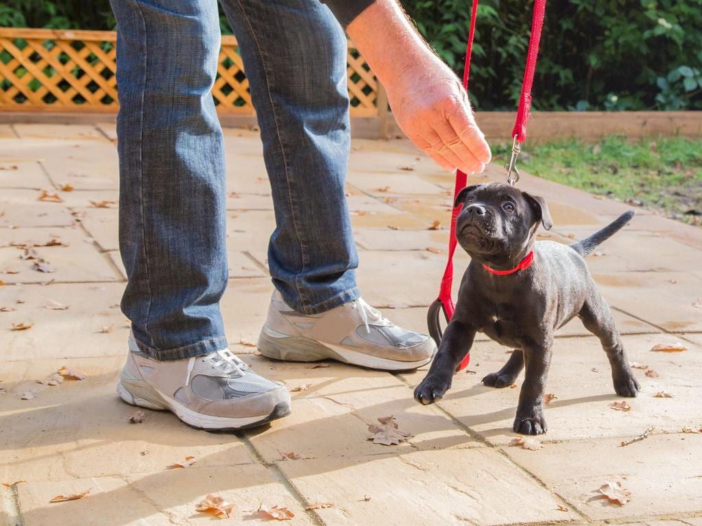 Toilet training is something that will be top of the agenda for new puppy parents, according to Petbarn head trainer Meredith Gallanty. Picture: iStock