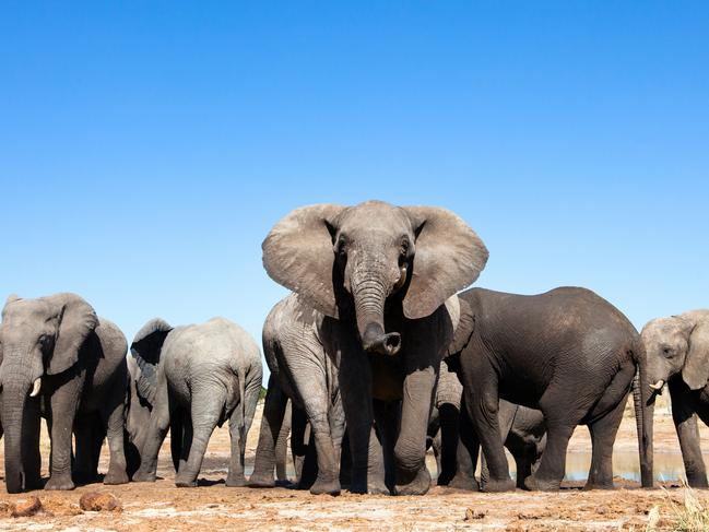 There has been a 600 per cent rise in the number of dead elephant carcasses found in the four years up to 2018.