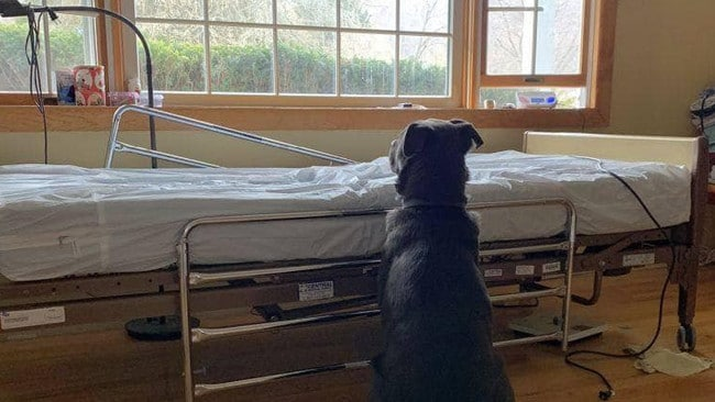 A loyal dog waited by his owner's bedside after he had died