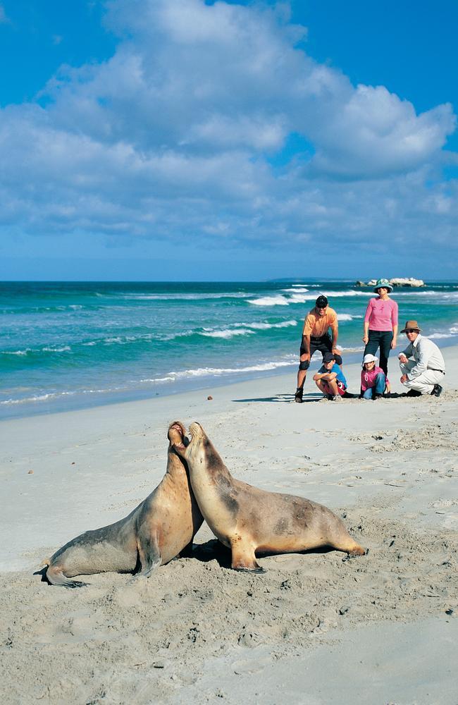 There's plenty of wildlife to meet on Kangaroo Island.