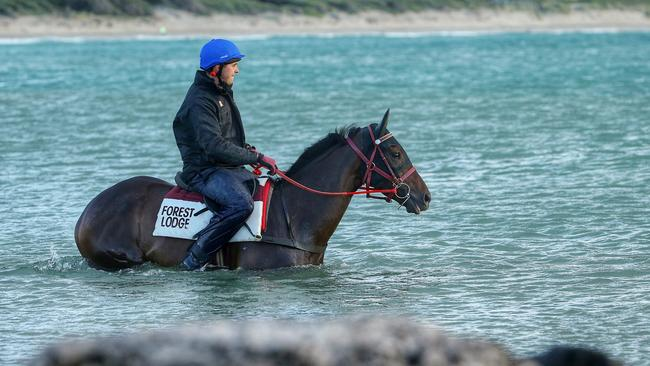 Melbourne Cup hopeful Signoff was a regular at Warrnambool Beach. Picture: Colleen Petch