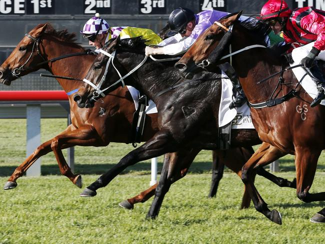 Thoroughbred action in NSW on Monday heads to Moruya and Taree.