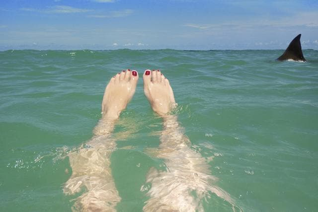 A woman's legs floating in the beautiful clear water of the ocean as a shark fin peeks up from the waters ahead or her.