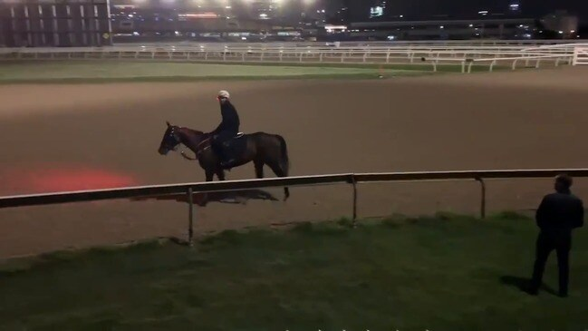Winx has a canter ahead of last race in Australia