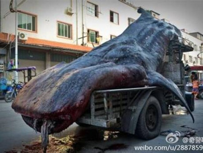 Off to market ... it is illegal to buy or sell whale sharks in China.
