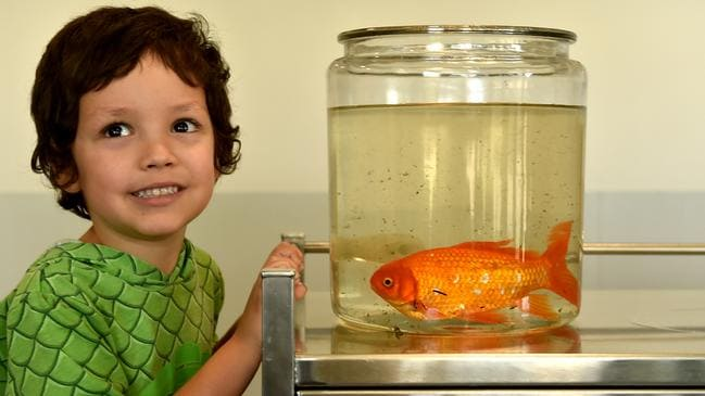 Carter Dare with his pet fish Bubbles. Picture: Evan Morgan