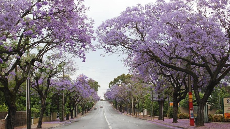 Increase in tree cover a priority in new plan for the burbs messenger tree coverage across eight adelaide councils would be increased as councils worked with landowners and malvernweather Image collections