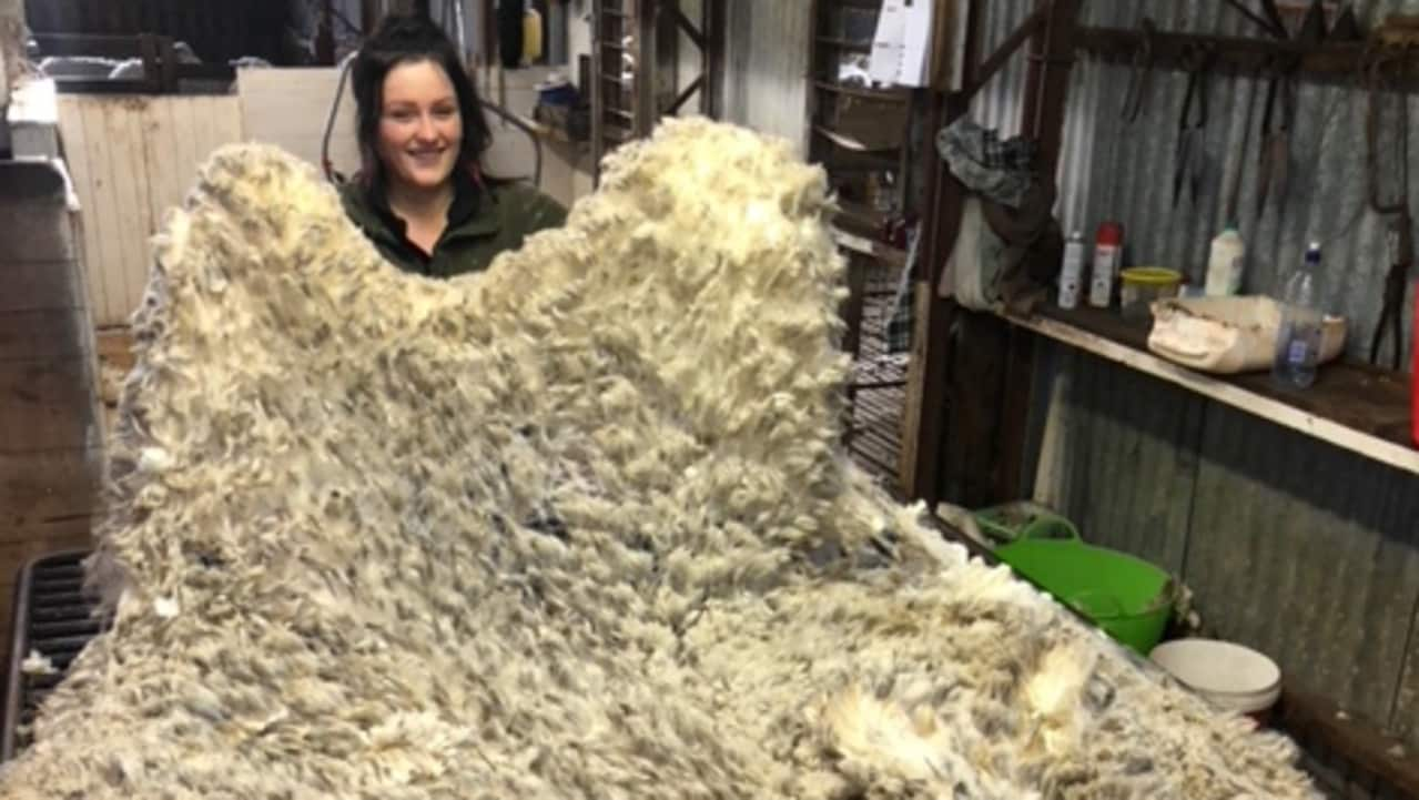 Shannon Donoghue has just thrown this fleece of shorn wool onto the wool table, for the classer to check it before it is pressed with similar fleeces. Picture: supplied