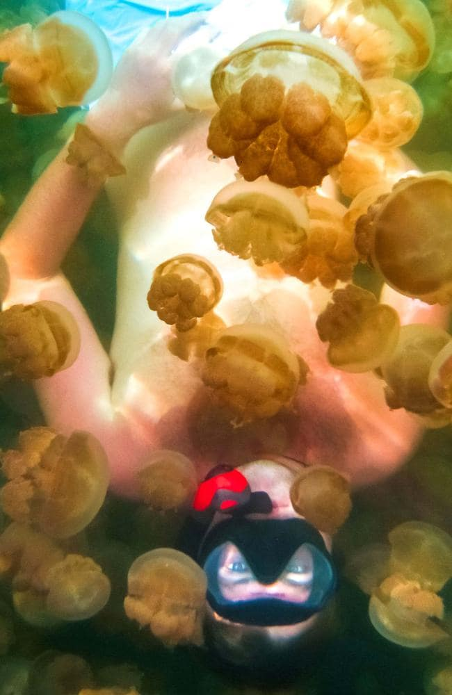 Diving in a sea of jelly fish.