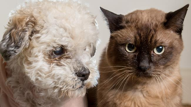 Dogs vs cats: the smarter pet revealed by scientists