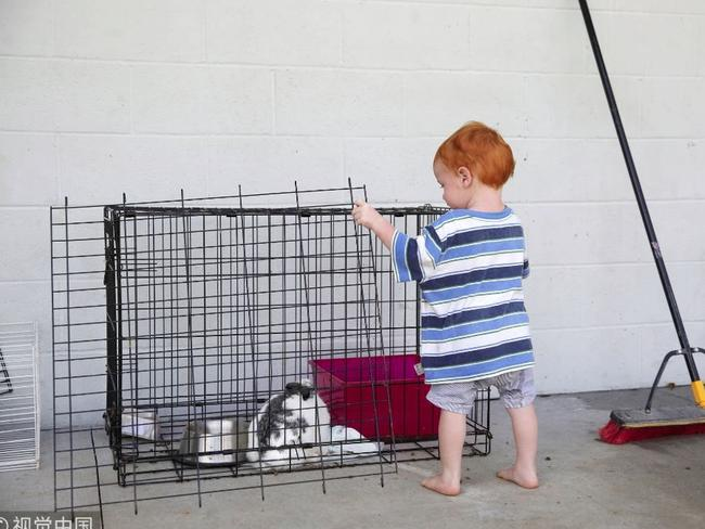 A little boy visits his pet rabbit. Picture: Reuters