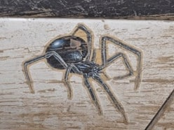 Terrence's vehicle had a distinctive spider sticker on its back-right door. Picture: Supplied