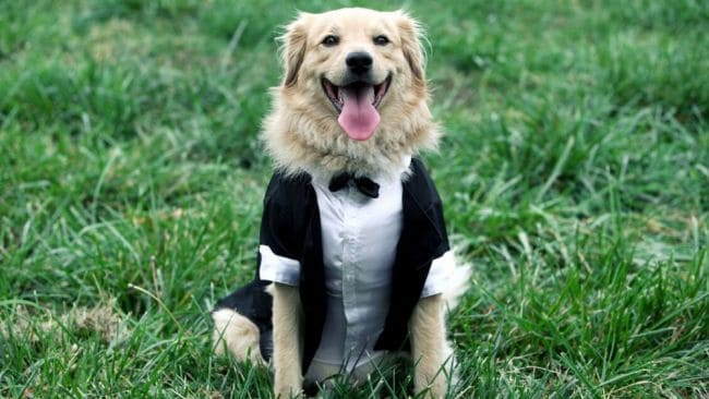 Sir Woofington deserves his own ride. Image: iStock