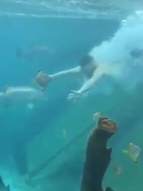 The man dives into the tank in his underwear, startling fish nearby. Picture: Facebook