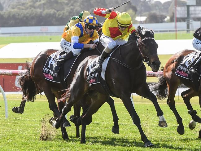 Approach Discreet, ridden by Harry Coffey, gains the upper hand at Sandown. Picture: Brett Holburt/Racing Photos