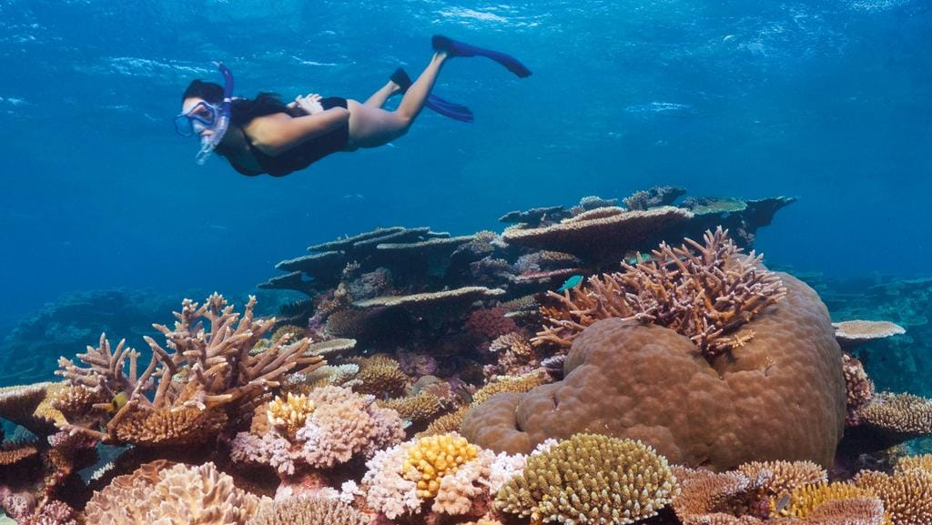 Great Barrier Reef Scientists Exaggerated Coral Bleaching